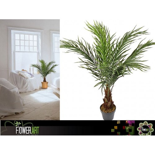 Pin Palm In Pot 90cm