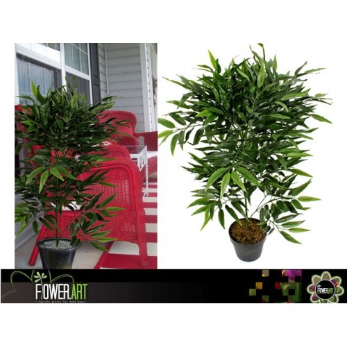 Buddah Belly Bamboo In Pot 95cm