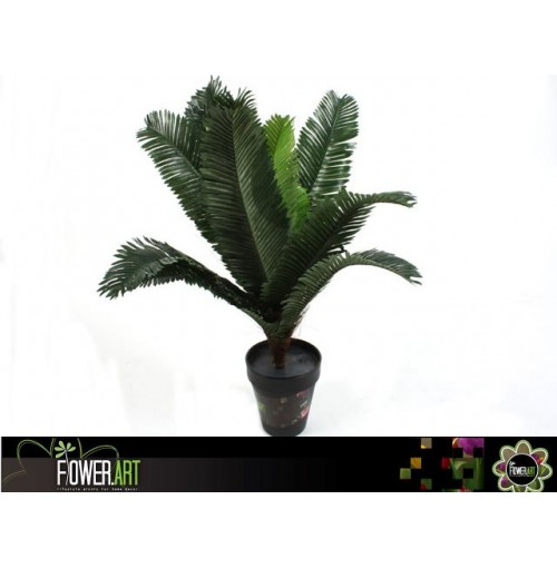 Potted 40cm Cycad