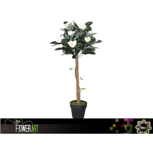 Potted 110cm Magnolia