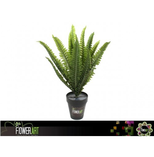 Potted 40cm Boston Fern